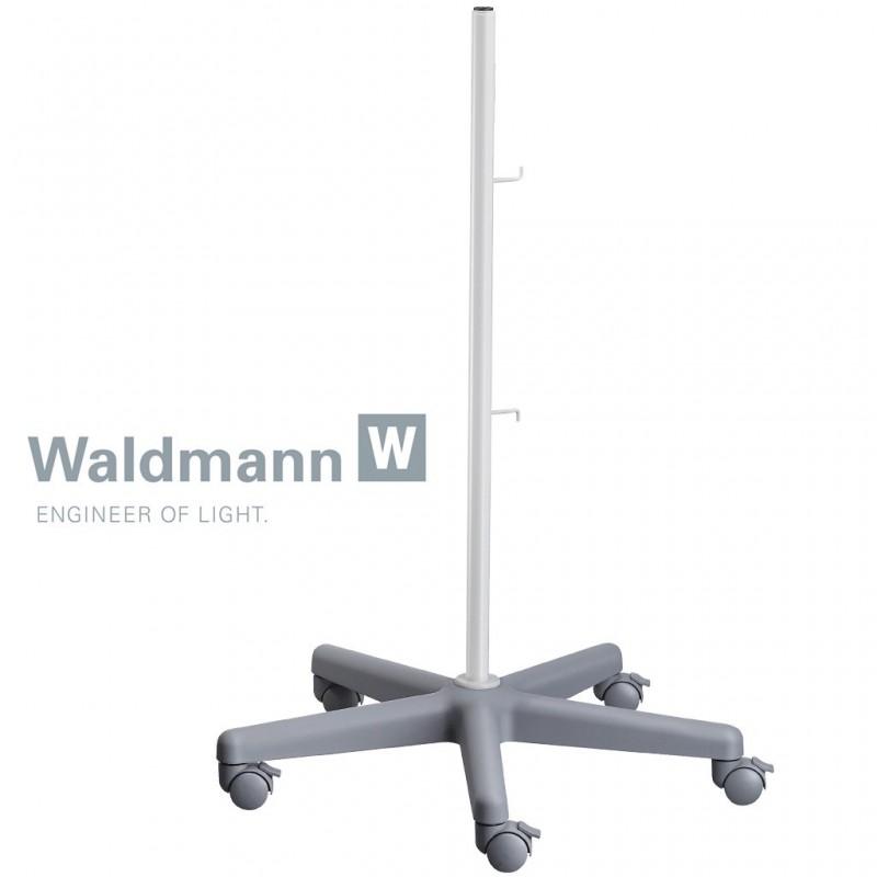 Pied Waldmann