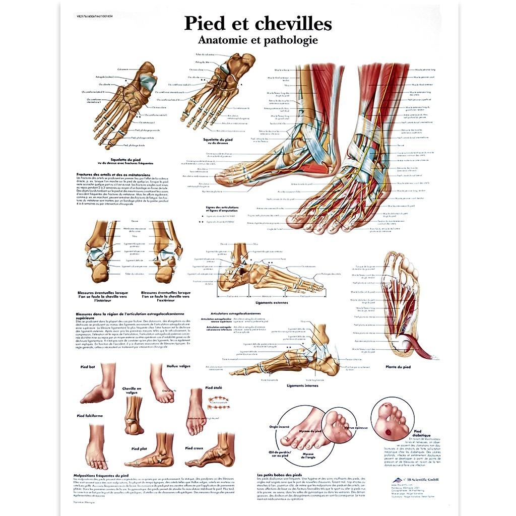 """Poster """"Pied et cheville"""""""